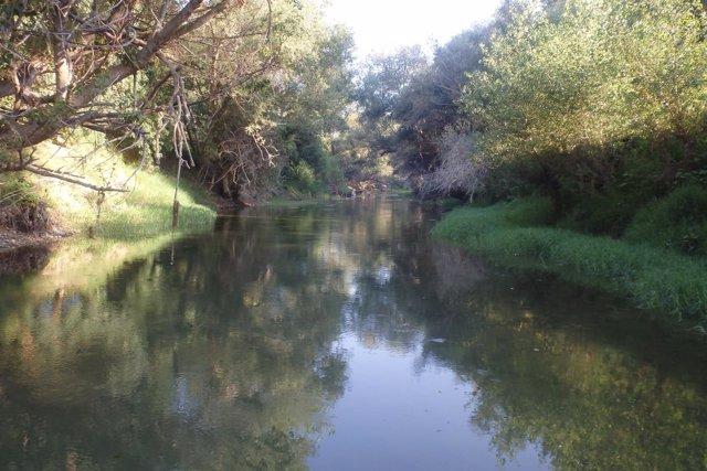Zona de hábitat en la Mejana aguas arriba de Gallur