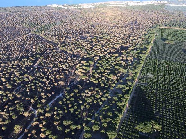 Imagen aérea de la zona afectada por el incendio de Moguer