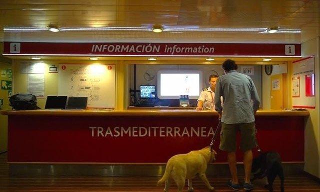 Trasmediterranea, pasajero con un perro