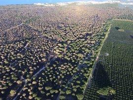 El director del Espacio Natural de Doñana hará en las próximas semanas una propuesta de recuperación ambiental
