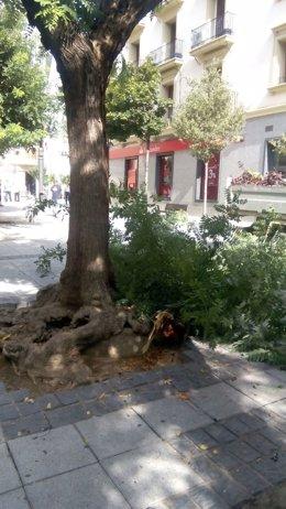 Caída de una rama de grandes dimensiones en la plaza Concepción Arenal de Huesca