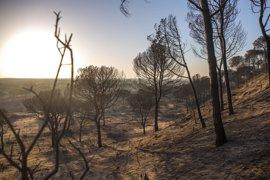 El incendio de Moguer afecta a 8.486 hectáreas de matorral y arbolado