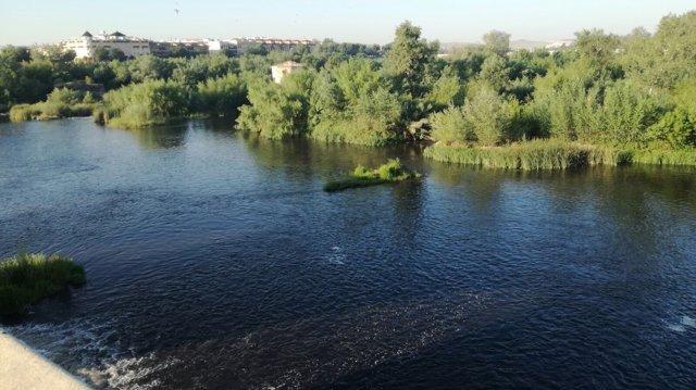 Imagen que ofrecía el Guadalquivir con el agua oscurecida por el orujo
