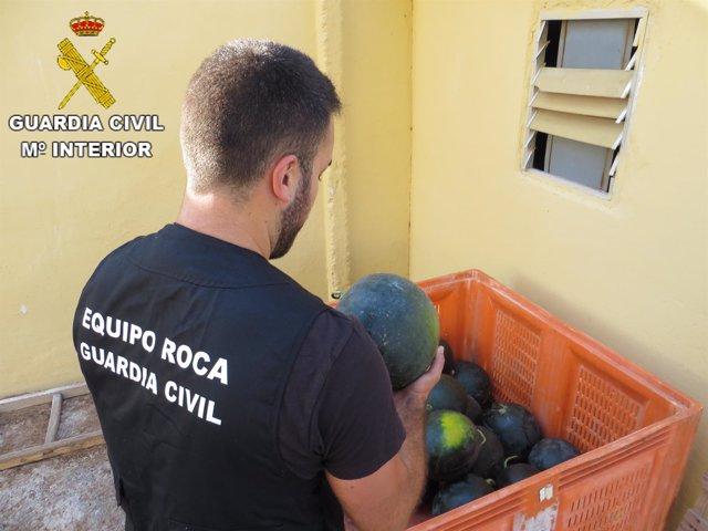 Investigadas dos personas por robo de sandias en Sagunto