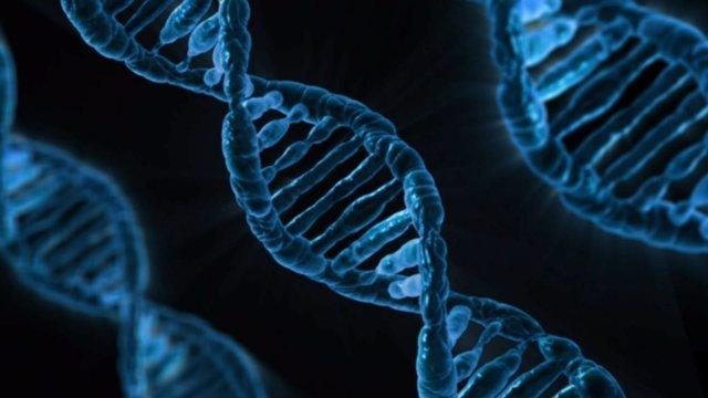 Estructuras genéticas