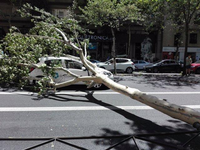Cae un árbol sobre un coche de Onda Madrid