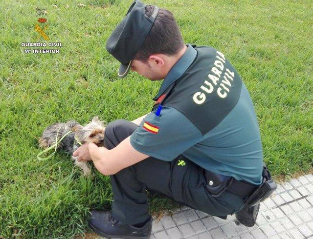 La Guardia Civil rescata a un perro, al que un hombre maltrató en la playa.