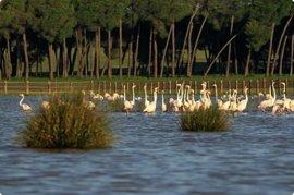 """El Defensor alerta de """"riesgos"""" en la conservación de Doñana y """"urge"""" medidas para su protección"""