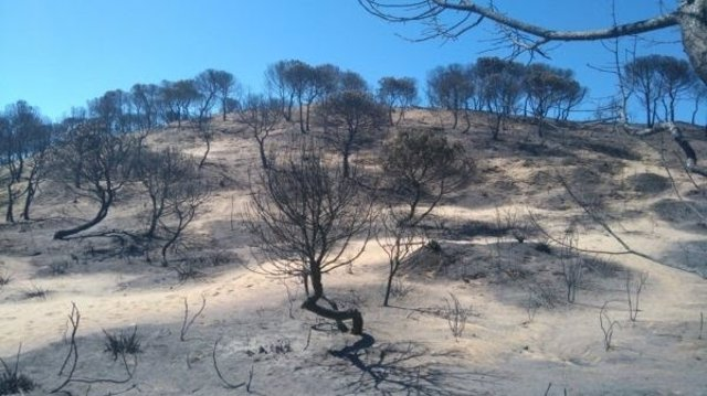 Incendio en Doñana ha afectado a zonas de alto valor ecológico