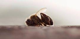 Greenpeace pide a la UE que tome nota del estudio que concluye que los neonicotinoides son negativos para las abejas