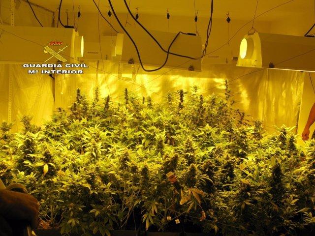 Laboratorio clandestino de cannabis