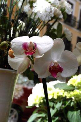 Flores en jardinería