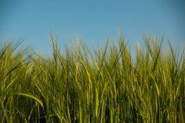 Organizaciones agrarias piden a Cañete la renovación del glifosato porque contribuye a reducir emisiones de CO2