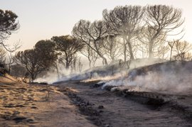 """WWF exige que la restauración de Doñana incluya la reordenación del territorio para prevenir el """"descontrol"""""""