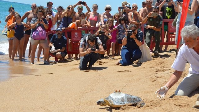 Liberan una tortuga en Blanes