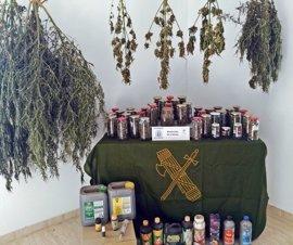 Detenido un vecino de Monterrubio de la Serena que tenía una plantación de marihuana en su casa