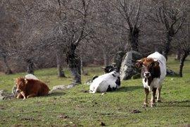 Esquerra Unida reclama unas fiestas en Baleares sin violencia animal