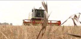 Exigen extremar precauciones en la cosecha mañana ante el alto riesgo de incendios