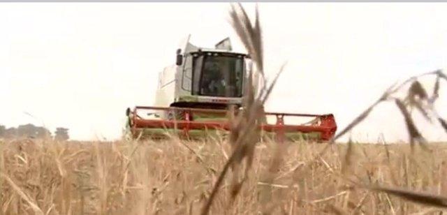 Una cosechadora recolectando cereal en CyL