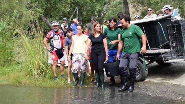 Liberados 400 alevines de trucha común en el río Guadalfeo