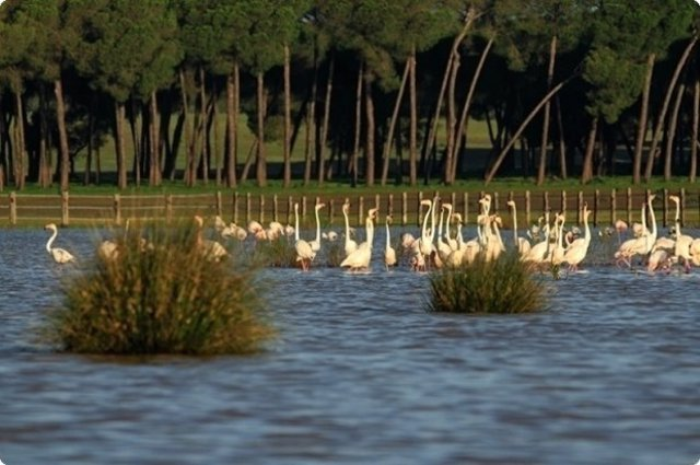 Parque de Doñana