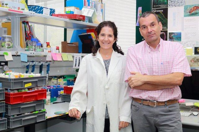 Científicos del CABD desvelan el funcionamiento de la migración celular