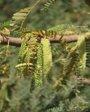 Foto: Eliminar los arbustos invasivos en zonas endémicas de malaria puede reducir su transmisión