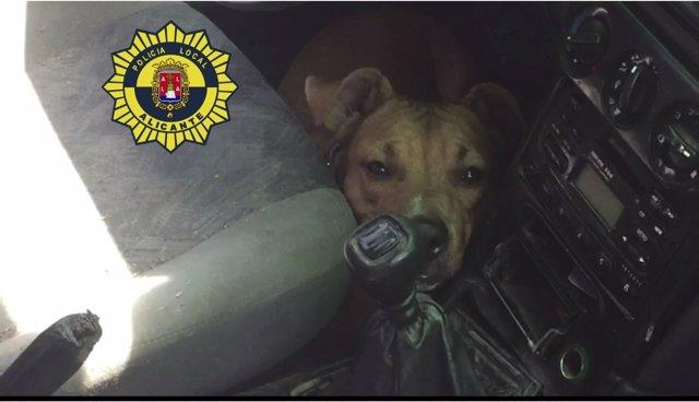 El perro rescatado dentro del coche