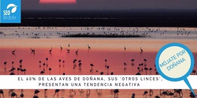 Campaña de SEO/BirdLife para conservar Doñana