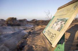 El Parlamento rechaza crear un grupo de trabajo para abordar la situación de Doñana