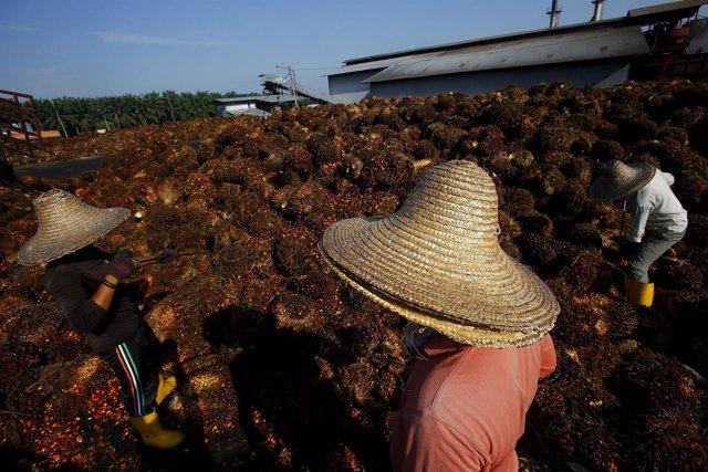 Trabajdores de la industria de aceite de palma en Kuala Lumpur, Malasia