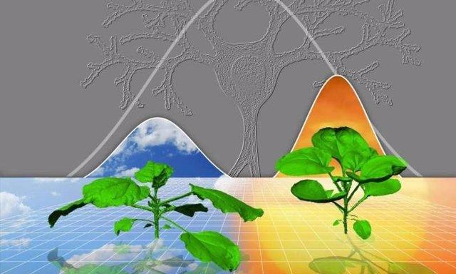 Las plantas usan iguales reglas para crecer en distintos contextos