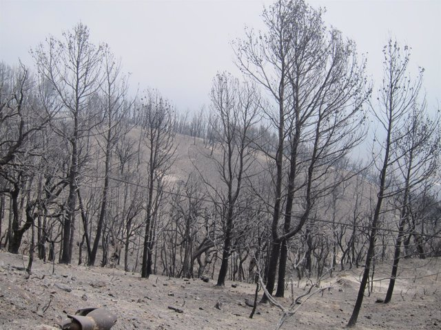 Zona de la Sierra de Lújar calcinada tras el incendio.