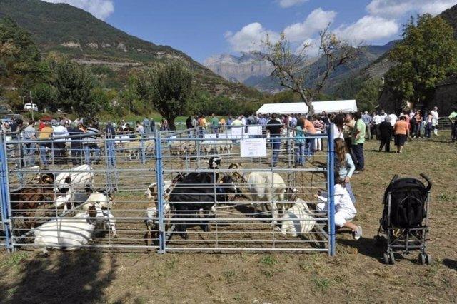Una de las ferias de la provincia de Huesca a las que ayuda la DPH