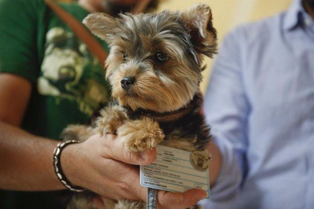 Chapa y carnet que tienen que tener los perros en Málaga