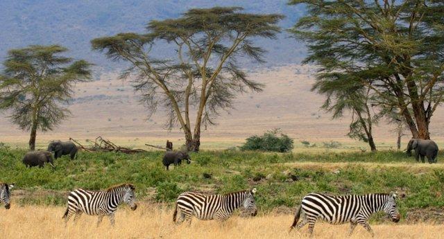 Fauna salvaje en el Parque de Serengeti