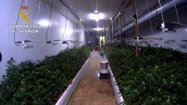 """Desmantelan un """"sofisticado"""" cultivo con 3.036 plantas de marihuana y detienen a un joven de 30 años en Níjar (Almería)"""