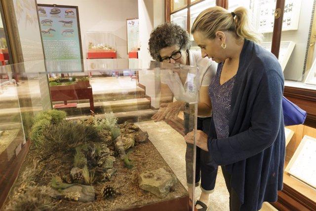 Exposición de reptiles y anfibios en el Museo de la Naturaleza