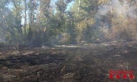 Ocho dotaciones de bomberos trabajan en un incendio en el Parc de la Mitjana de Lleida
