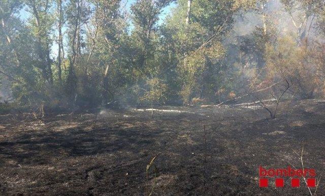 Incendio En El Parc De La Mitjana De Lleida