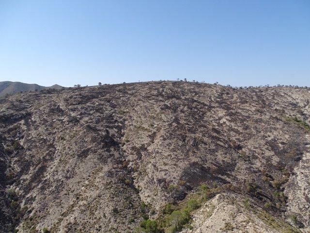 Incendio de sierra Larga en Jumilla