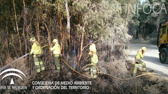 Trabajos de liquidación por un incendio forestal en Niebla (Huelva)