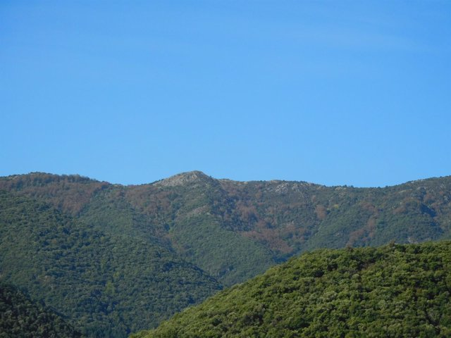 Un bosque en el Montseny