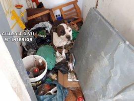Rescatados varios perros abandonados en una azotea de Roquetas con señales de peleas ilegales