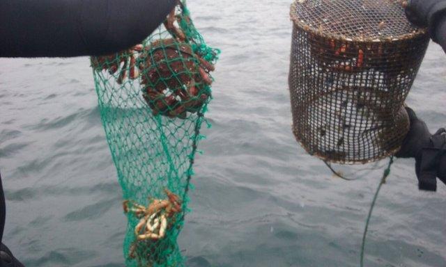 Intervenidos más de 360 kilos de pescado y marisco en Galicia