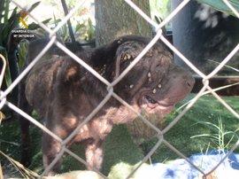Detenido en Arahal por tener a un perro muerto y a otro desnutrido en su propiedad