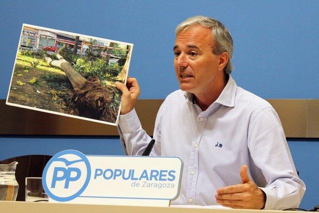 Jorge Azcón (PP) muestra una foto del árbol caído en Delicias