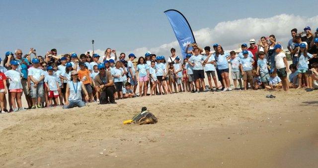 Suelta de la tortuga 'Gandia' en El Saler