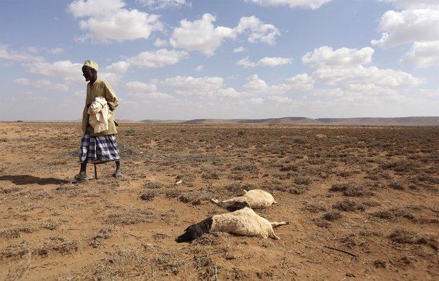 Sequía en Somalilandia