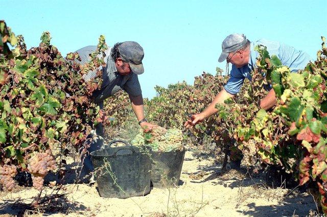 Imagen de la vendimia en Huelva.
